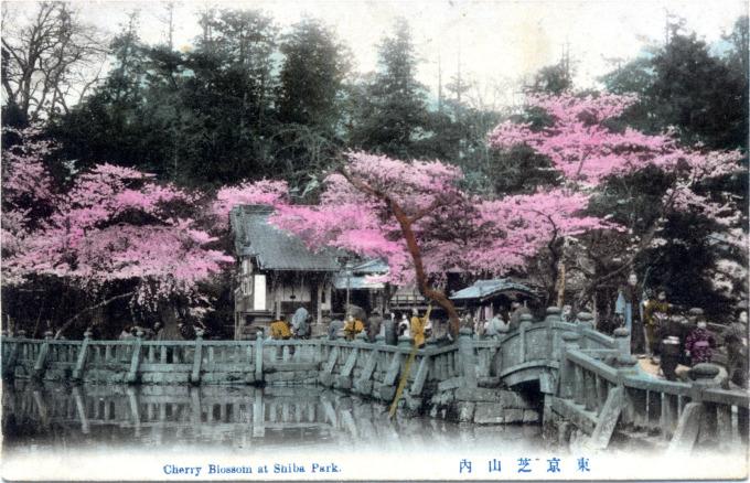 Cherry Blossoms at Shiba Park, c. 1910.