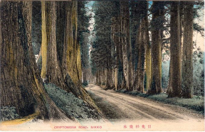 Cryptomeria Road, Nikko, c. 1910.