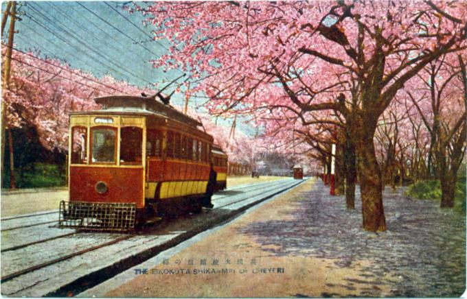 Streetcar underneath a cherry blossom canopy, British Embassy, Akasaka, c. 1920.
