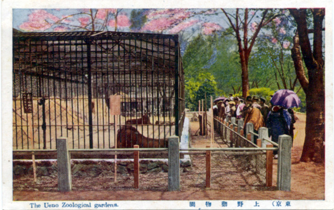 The Ueno Zoological Gardens, Tokyo, c. 1930.