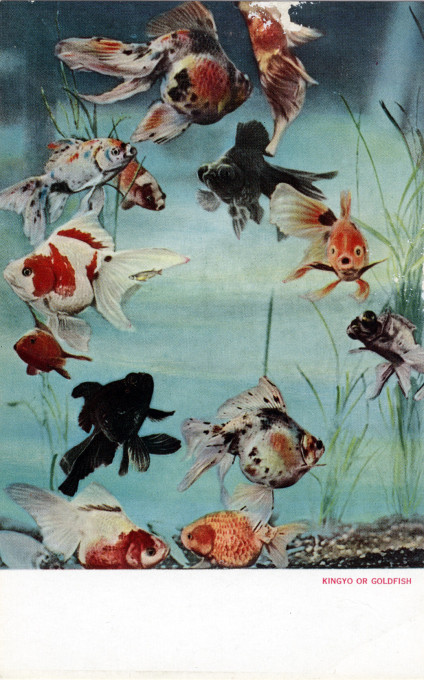 Goldfish, c. 1940.