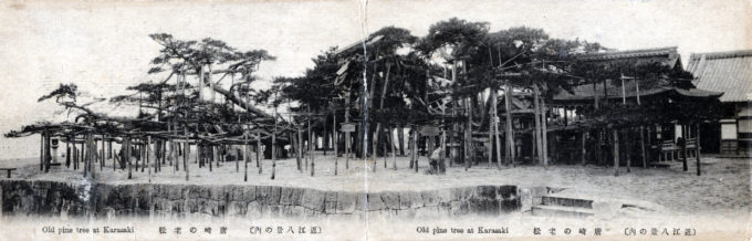 Panoramic view of the Karasaki pine tree, c. 1910.