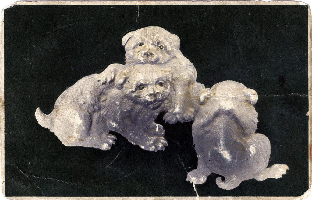 Akita dog puppies, c. 1910.