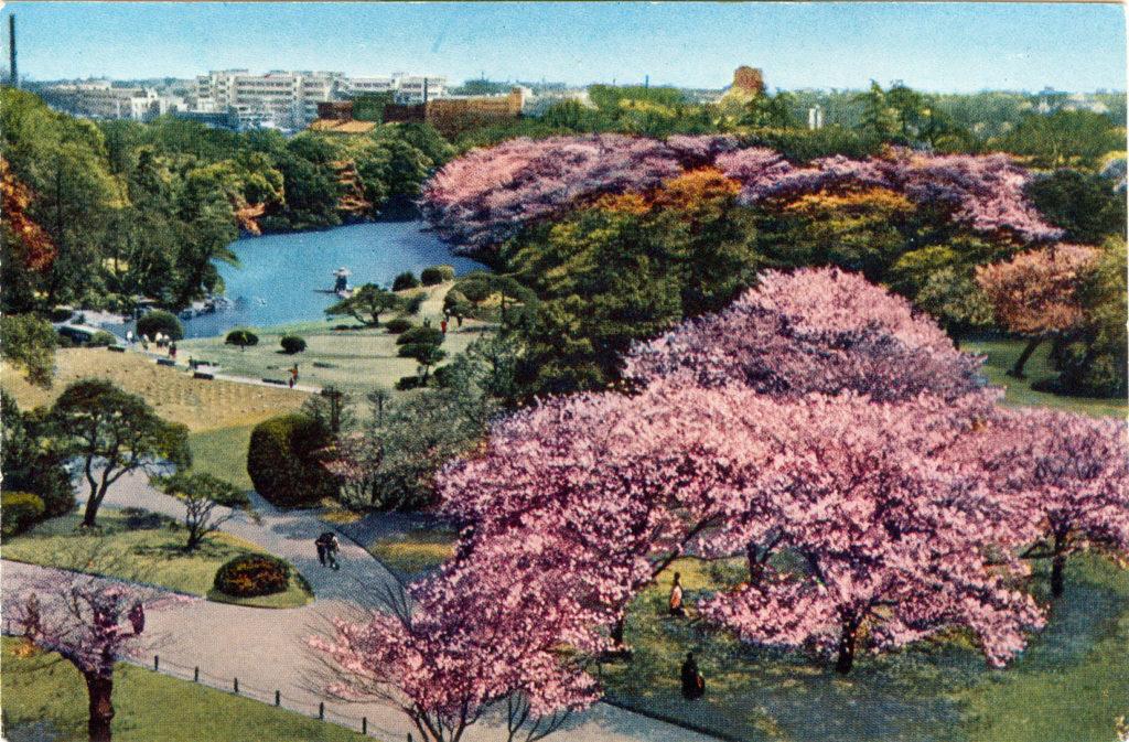 Shinjuku Gyoen (Garden), c. 1960.